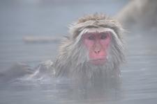 サル湯.jpg