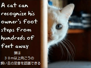 a-cat-can-recognize-his-owners-foot-steps-from-hundreds.png