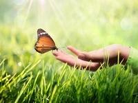 butterfly-172501724.jpg