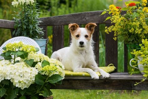 dog flowers.jpg