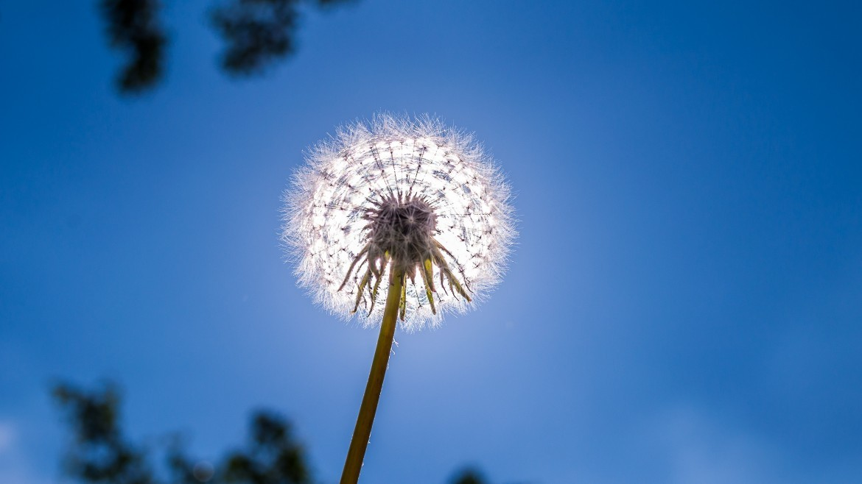 hay-fever-.jpg